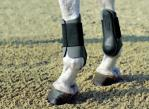 Horse boots. Neoprene boots front