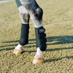 Allround Boots - hind horse
